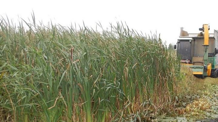 Nachwachsende Rohstoffe aus vernässten Mooren – eine Chance für den niedersächsischen Moor- und Klimaschutz?