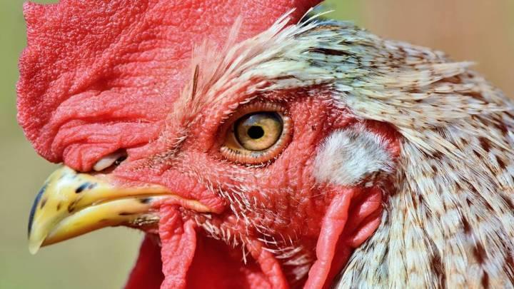 Erstmalige Infektion von Menschen mit Geflügelpestvirus H5N8 in Russland