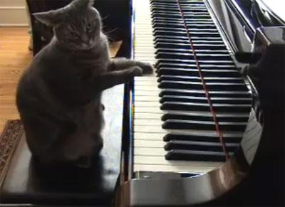 นอร่า เจ้าเหมียวนักเปียโน