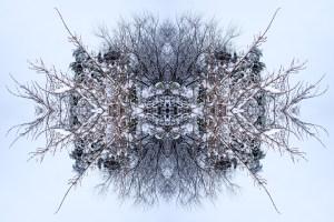 Snow Bow #5