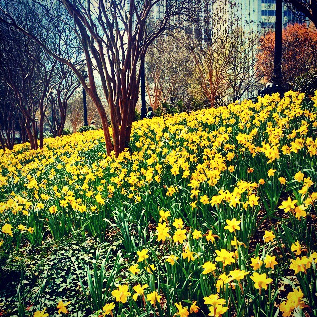 Springtime at Woodruff Park
