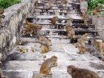Steps of Galta Monkey Temple