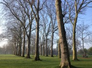 Big bare trees