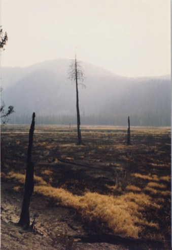 Burnt trees after the 1988 fires