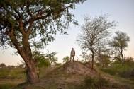 Atop termite mound
