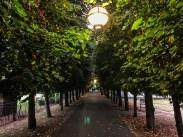 Windsor tree-lined path