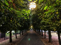 Windsor tree-lined path