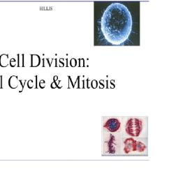 Translation Vs Transcription Venn Diagram Er For Chat Application Cell Cycle, Mitosis, & Meiosis | Mrs. Haley's-biology Site
