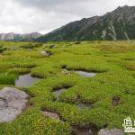 雲之平-瑞士庭園-水晶岳