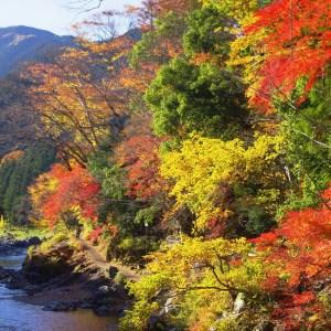 奧多摩溪谷紅葉