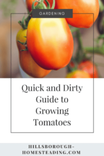 how to grow tomatoes from seed in containers organically homestead garden