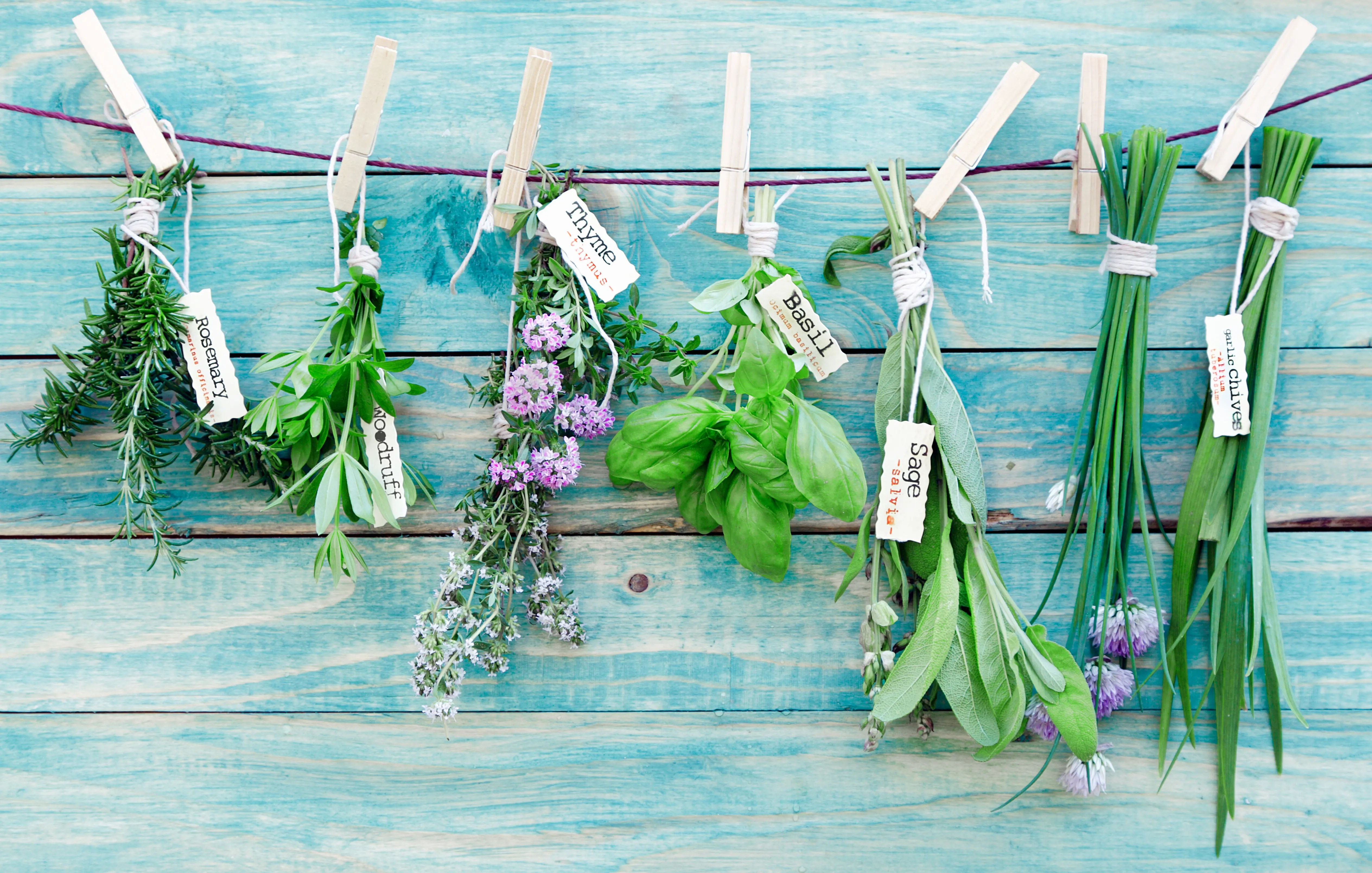 Basil Propagation: How to Propagate Basil From Cuttings