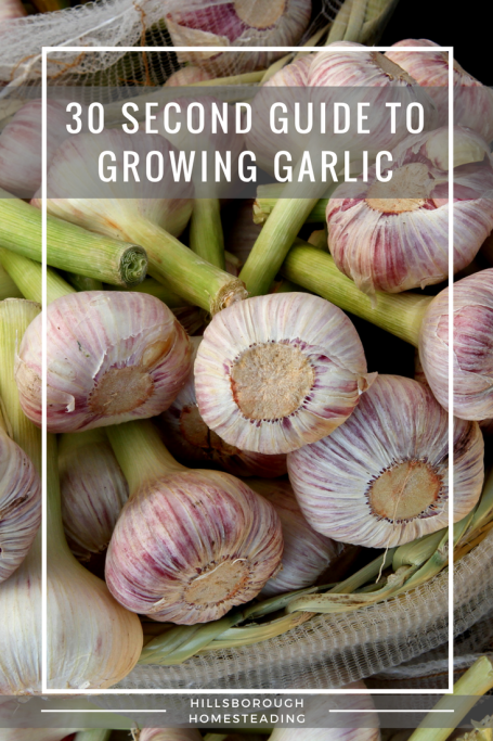 guide to growing garlic