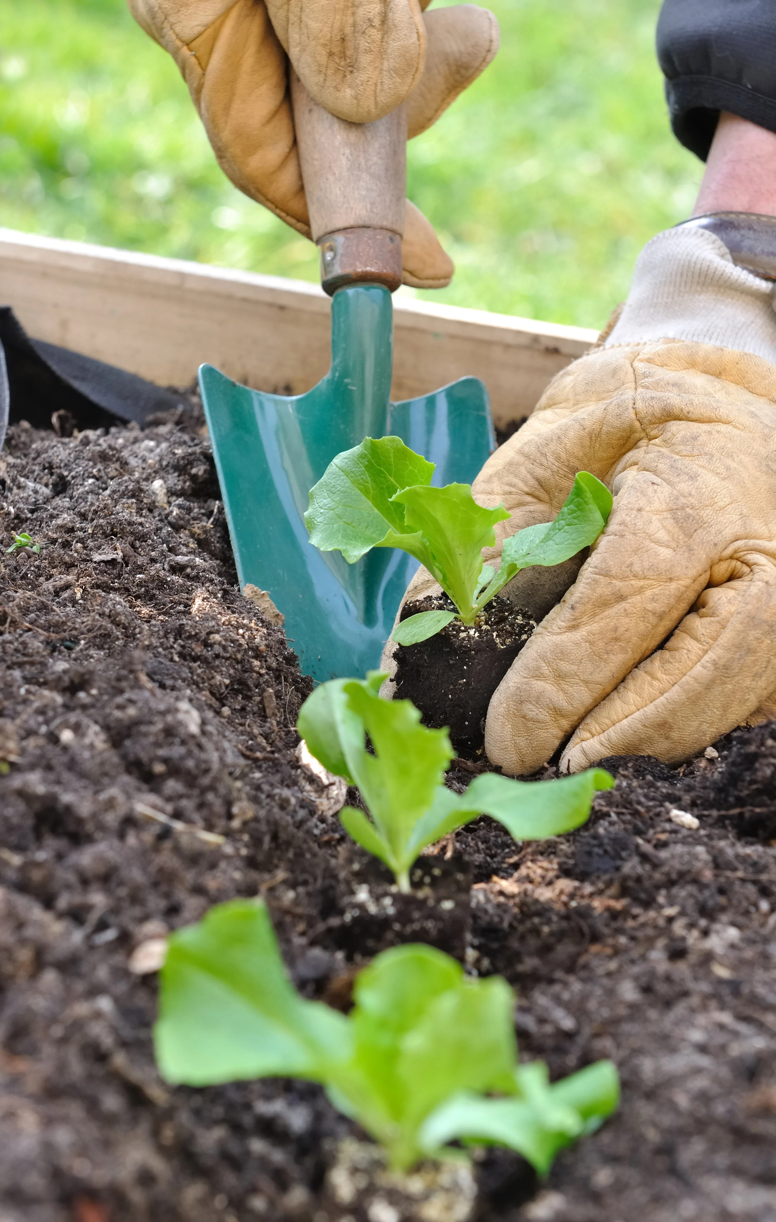 Tips and Tricks For Planning Your Garden