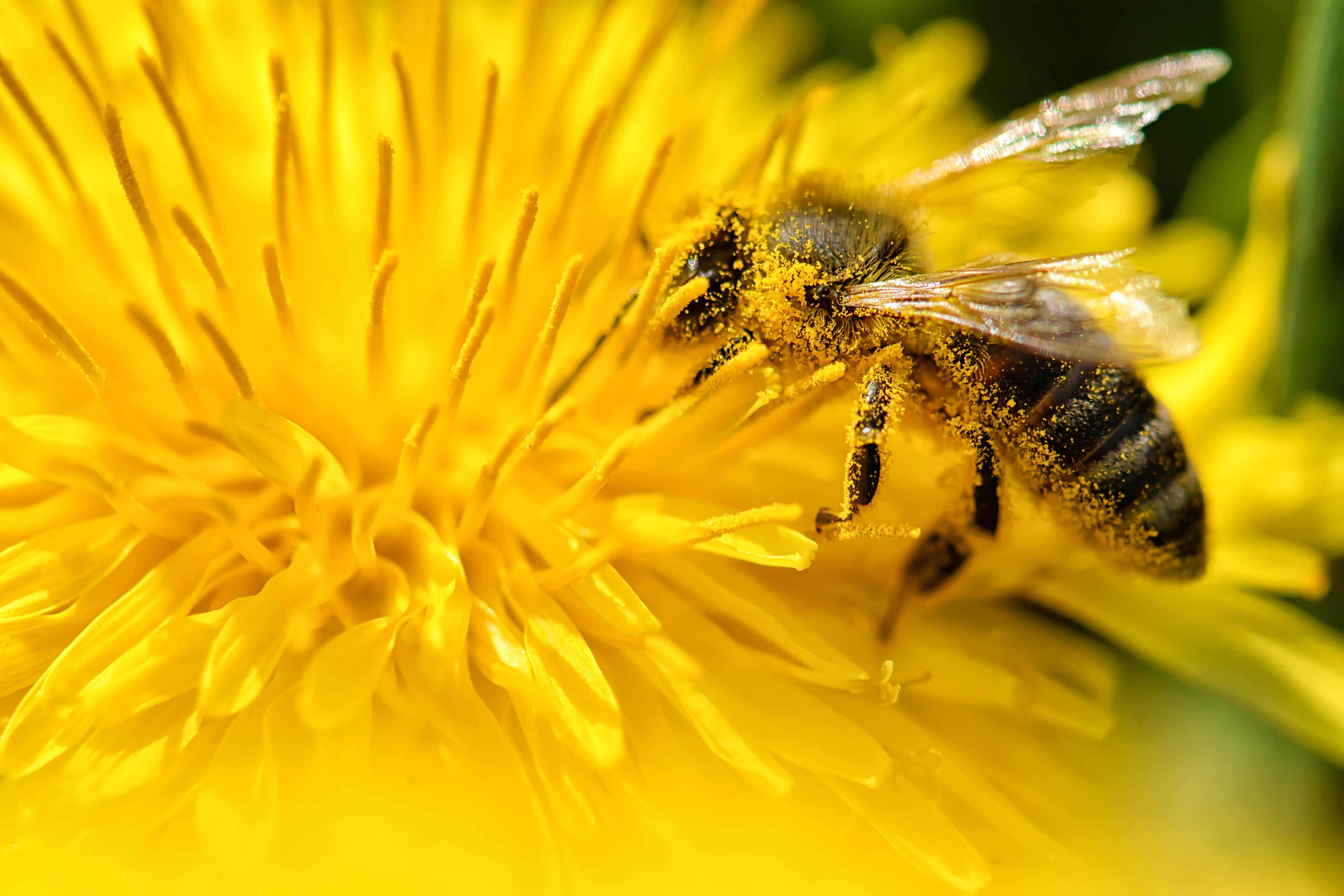 How to Attract Pollinators to Your Homestead Garden