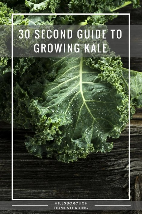 guide to growing kale