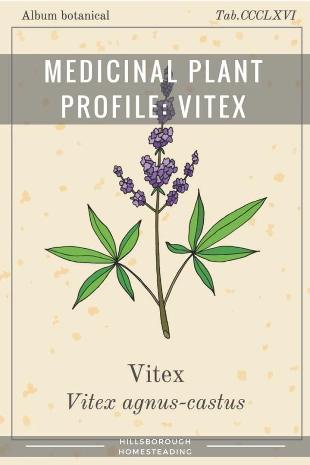 vitex (chasteberry)