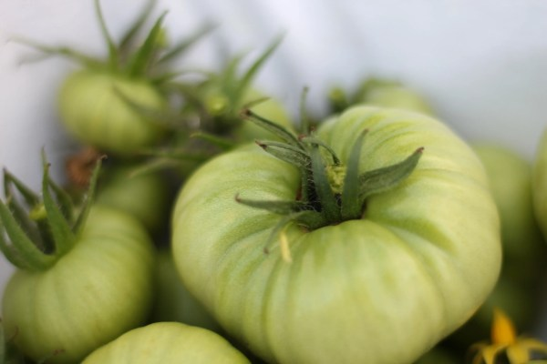 green tomatoes canning recipe