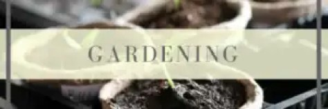 gardening on the homestead, growing herbs and vegetables