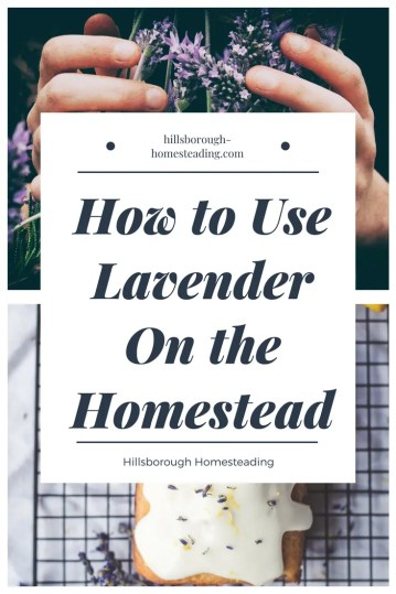 how to use lavender on the homestead for health and medicine and cleaning