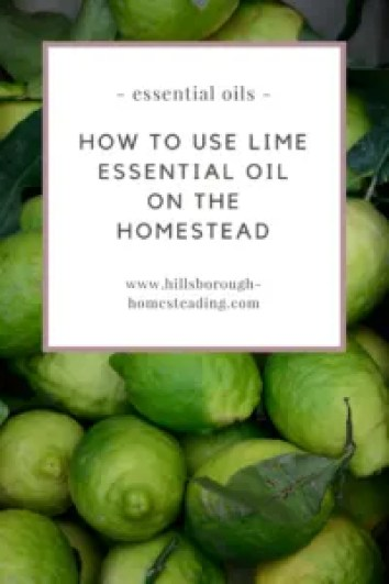 how to use lime essential oil oils homestead recipes ideas
