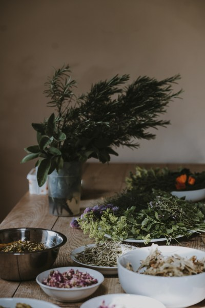 20 medicinal trees you can forage and how to use them