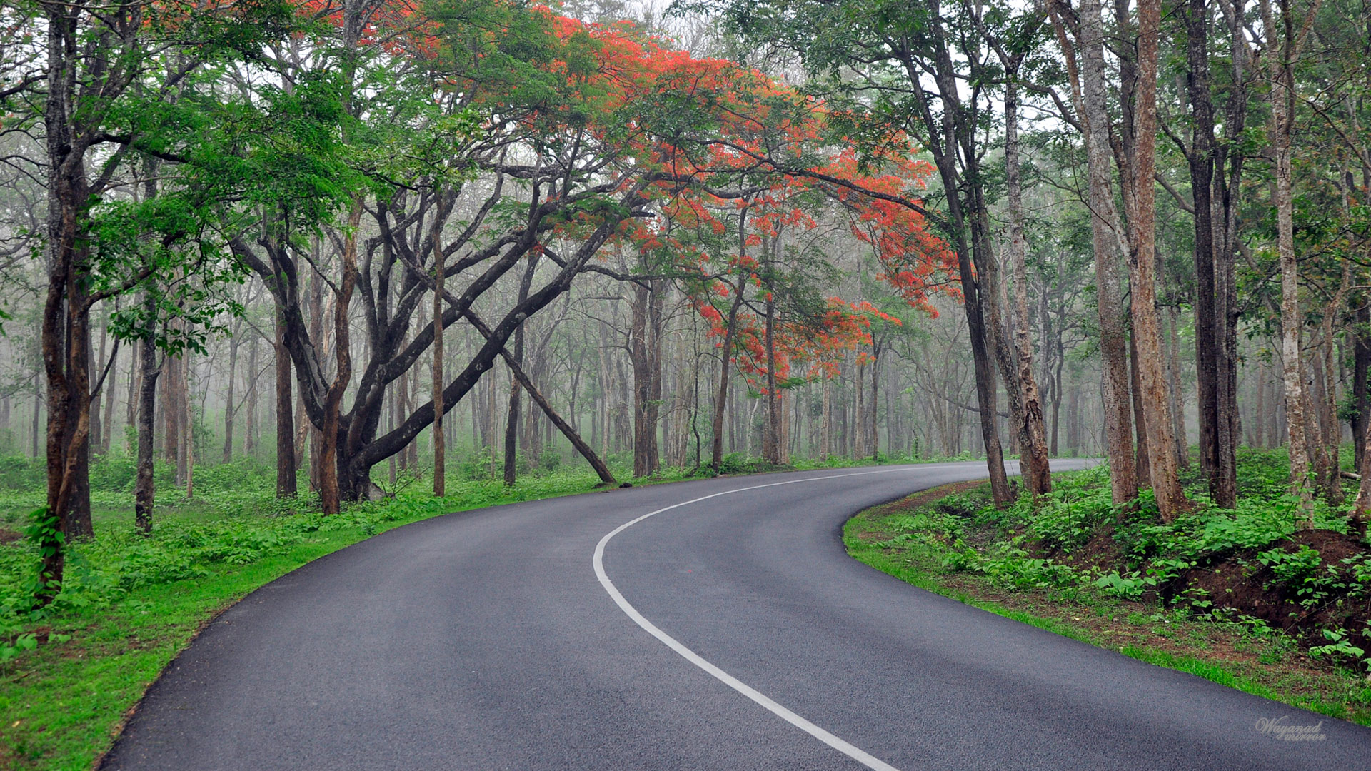 Rain Fall Hd Wallpaper We Are The Best Mysore Ooty Tour Provider In Kolkata Also