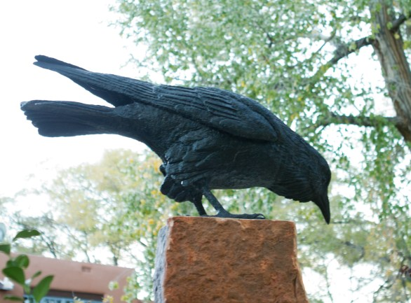 One of two crows.