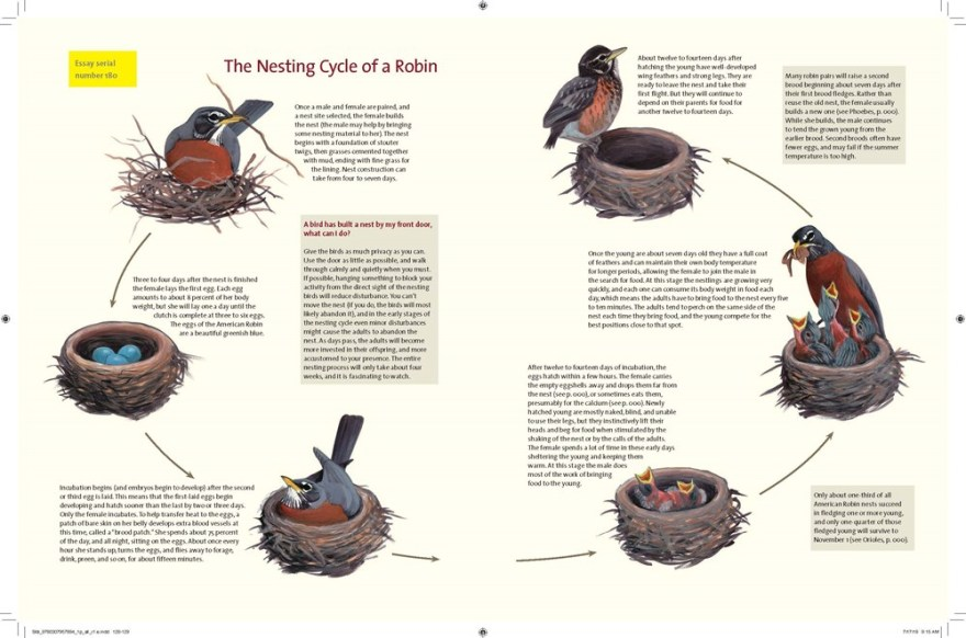 """Page from """" What It's Like to Be a Bird : From Flying to Nesting, Eating to Singing--What Birds Are Doing, and Why,"""" by David Allen Sibley"""