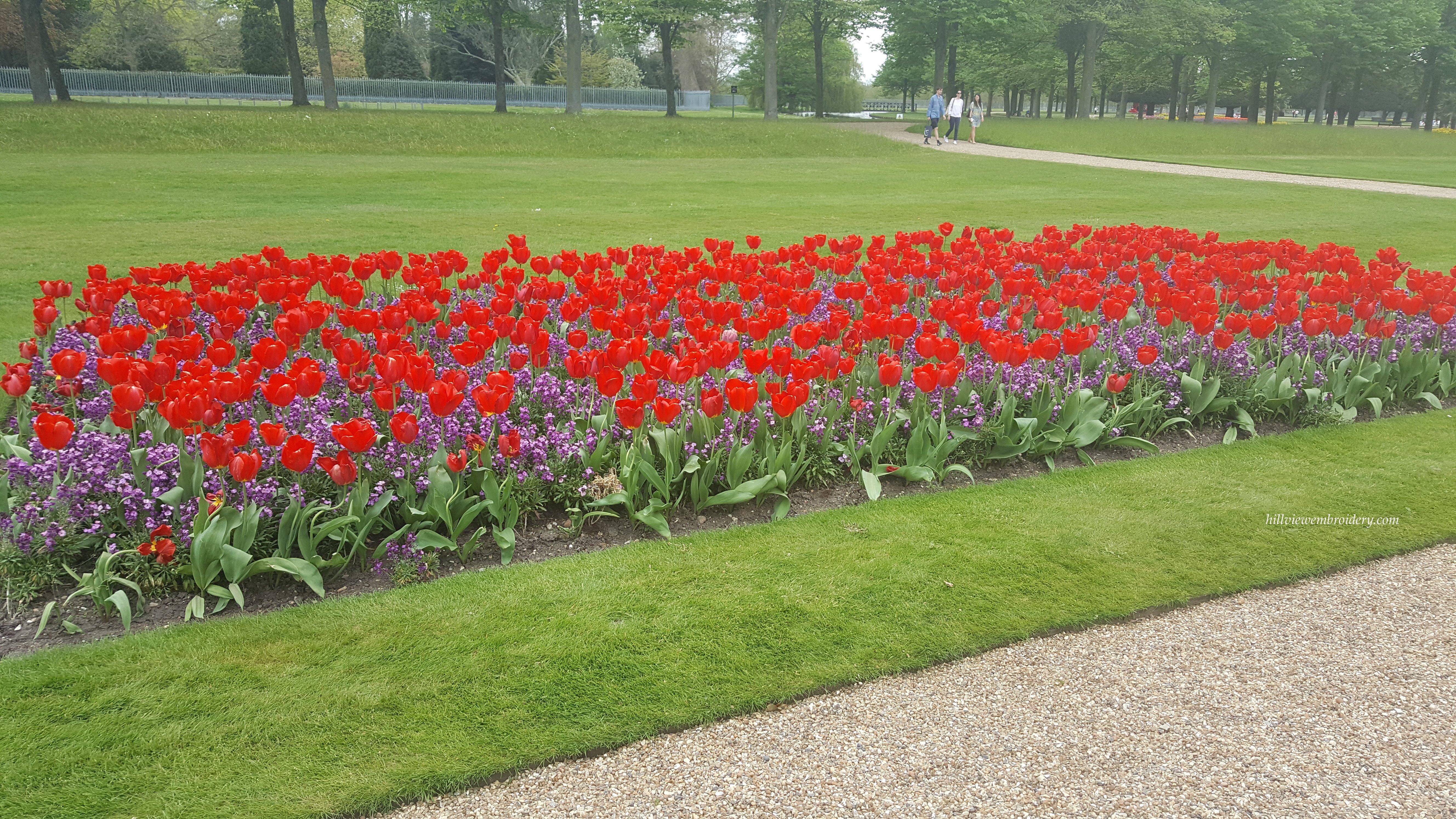 tulips at Hampton Court