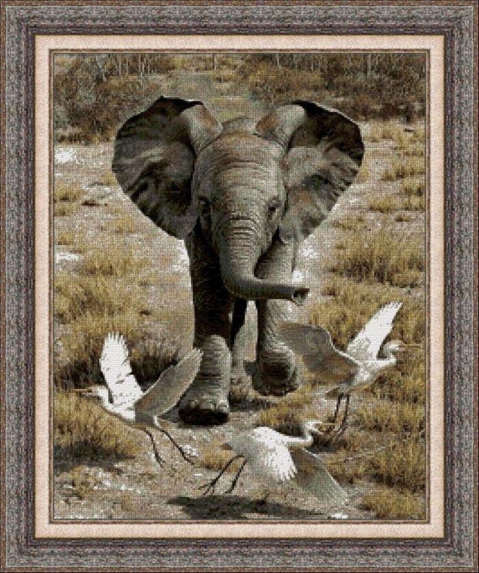 Animales 0028 1