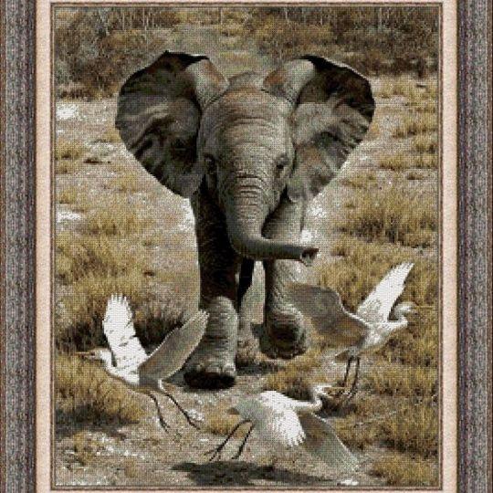 Animales 0028