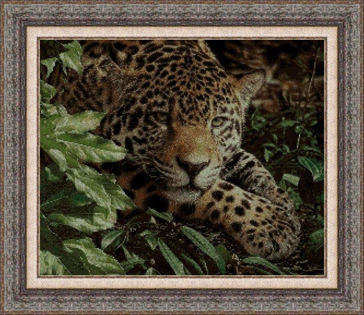 Animales 0035