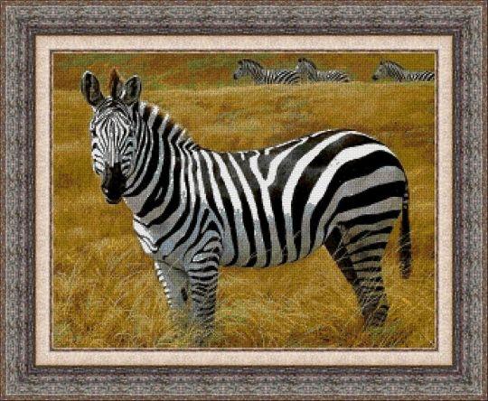 Animales 0053