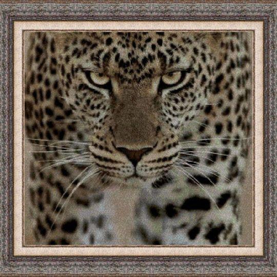 Animales 0069