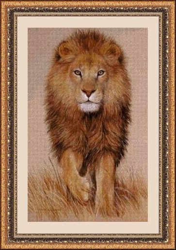 Animales 348 1