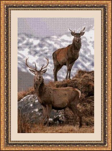 Animales 488 1