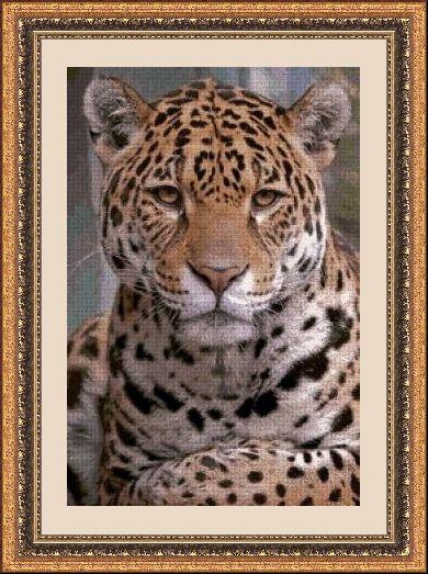 Animales 493 1