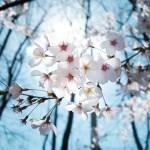 新高校生にオススメな春休みの過ごし方9選!思う存分楽しもう!