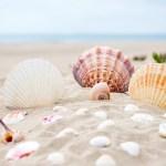 高校生にオススメな海の遊び7選!夏の思い出を作ろう!