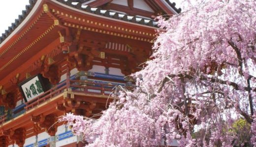 関西のオススメ桜スポット13選!花見や鑑賞にオススメの名所をご紹介!
