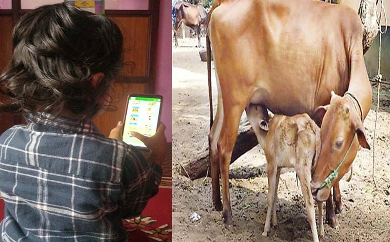 छोरालाई अनलाइन क्लास पढाउने फोन किन्न गरिब बाबुले बेचे दुहुनो गाई