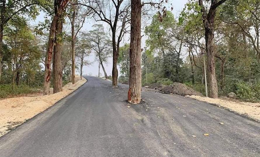 हुलाकी राजमार्ग: बीच सडकमा रुख राखेर कालोपत्रे