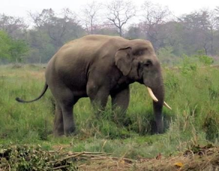 One injured in attack of wild elephant in Jhapa
