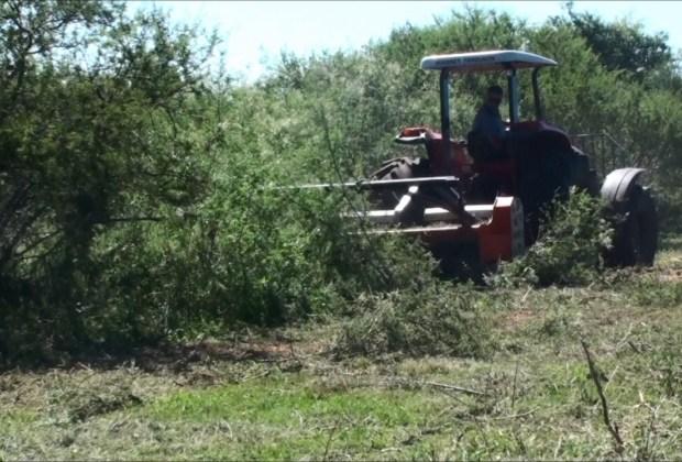 Triturador Florestal Himev Ecotritus HP 240 triturando espinilho, anone, xirca e garupa