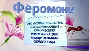 феромоны