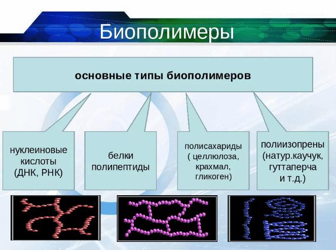 Биополимеры