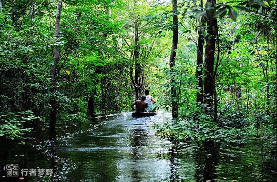 探秘亞馬遜叢林深處部落的螞蟻儀式_旅游_環球網