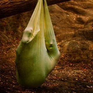 an unyielding limb