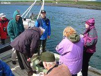 Staldrað við á flotbryggju við Þerney.